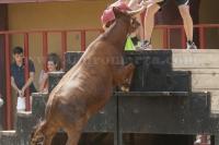 vaca hnos belles